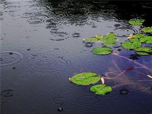 落入水中的雨滴