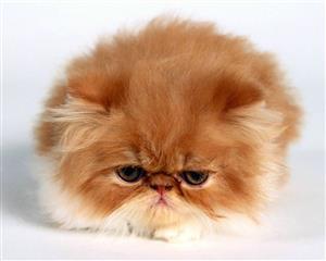 不高兴的猫