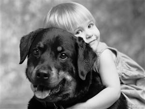 人与动物的和谐
