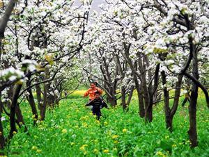 春花—白的像雪1