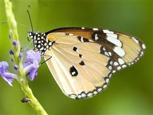 蝴蝶飞来飞去