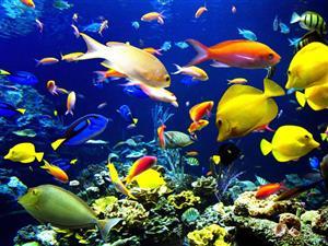 缤纷的世界-群鱼竞游