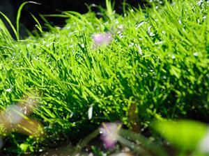 缤纷的世界-小草翠绿