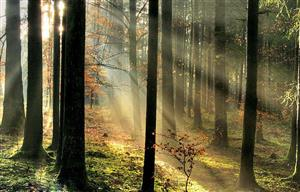 树林中的丁达尔效应