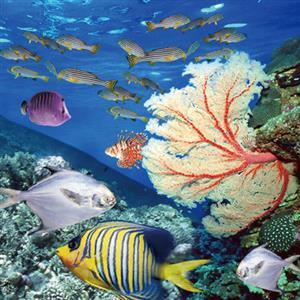 以海洋为家乡的元素——氯