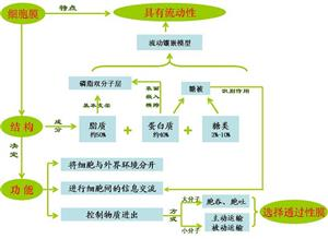 细胞膜结构知识图2