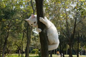 爬树的猫3
