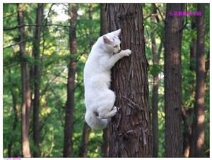 爬树的猫2