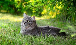 草丛中的猫