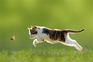 抓蝴蝶的猫