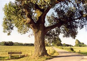 让奉献之树常青