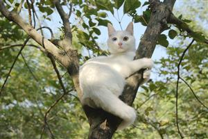 爬树的猫1