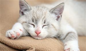 可爱的小猫1
