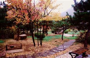 秋雨后的公园