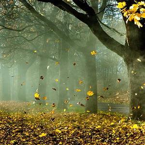 作家作品:《漫步在凋零的树林》刘湛秋