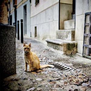 推荐阅读:老猫