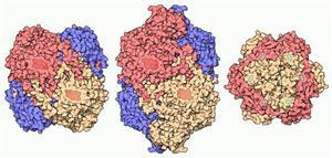 过氧化氢酶1