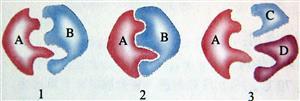 酶具有专一性