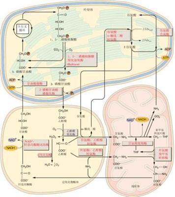 细胞代谢2