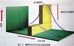 酶降低化学反应活化能的图解