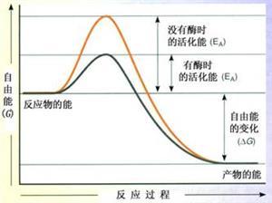 酶降低活化能