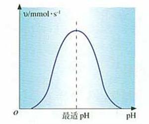 酶活性受pH影响示意图