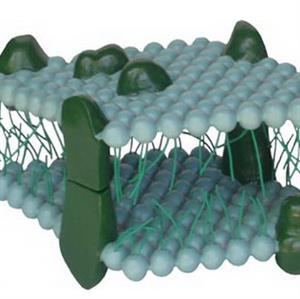 流动镶嵌模型的特性