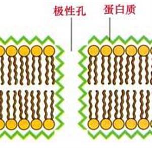 膜的分子结构及特点