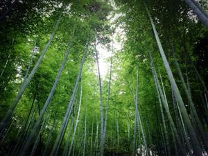 雨中的森林