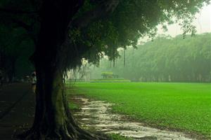 雨中的草地