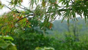 秋雨后的树