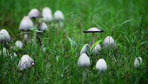 雨后的蘑菇