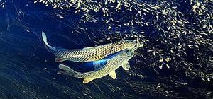 鱼翔浅底1