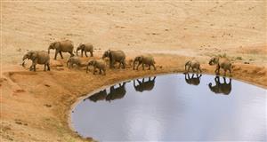 大象的迁徙