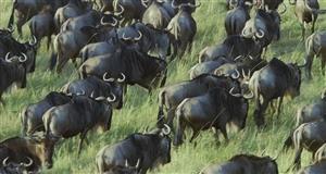 犀牛的迁徙