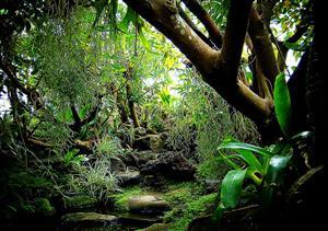 热带丛林2
