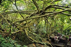 热带丛林4