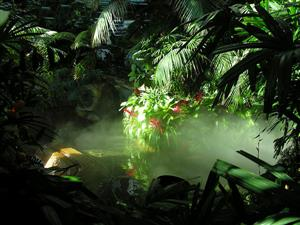 热带丛林1