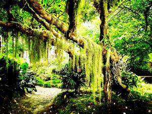 热带丛林5