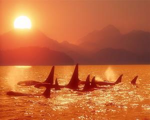 海面上的鲸群