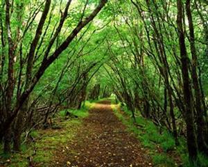 自然 郁郁葱葱的树林