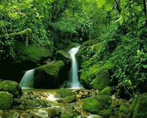 自然 山涧泉水