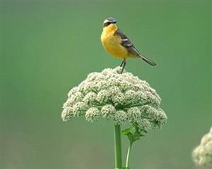 动物 骄傲的鸟