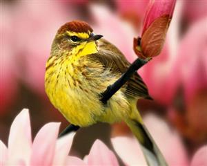 动物 花上的鸟
