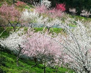 植物 花开满树