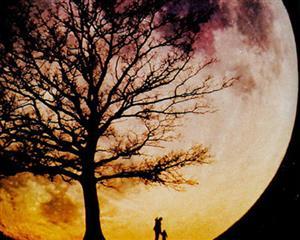 皎洁的月光
