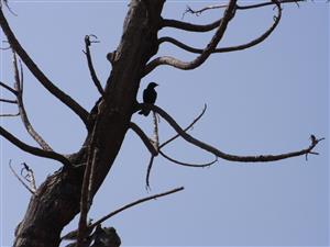冬天的乌鸦