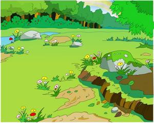 自然 雨水浇灌的野花