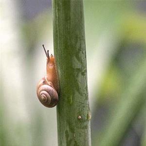 树上的蜗牛
