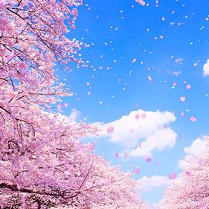 《春》课文朗读1
